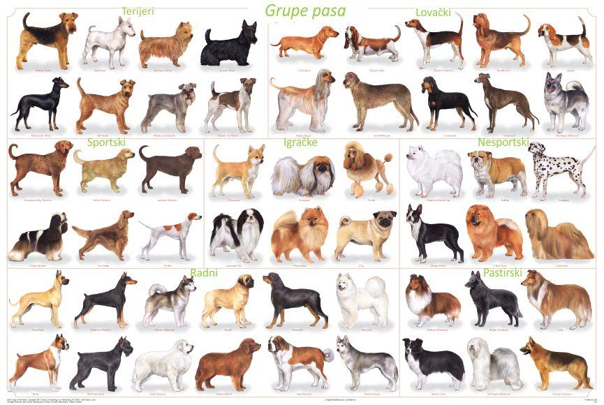 Kako izabrati psa - Grupe Pasa