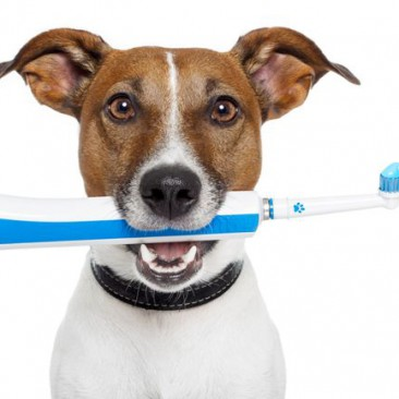 Stomatologija kod pasa i macaka