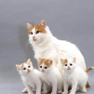 Ultrazvuk kod životinja